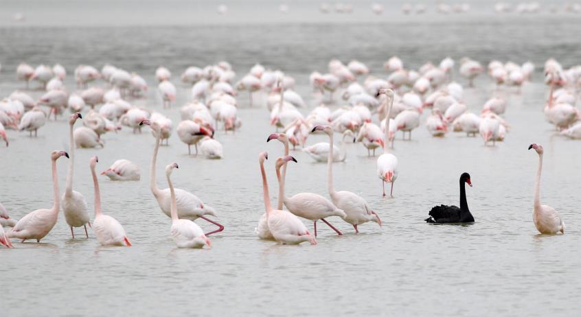Озеро в ларнаке куда прилетают фламинго фото