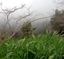 В Троодос за туманами (фото и видео)