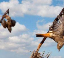 В полиции Кипра трудятся друзья браконьеров!?