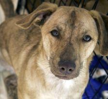 Кипрское правительство намерено заняться проблемами животных