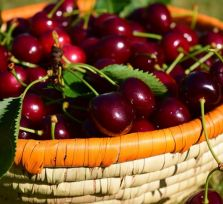 Черешневые фестивали на Кипре