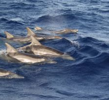 Близ Кипра плавают пять видов китообразных