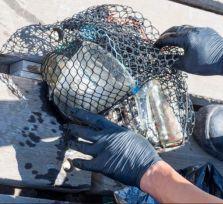 Кипрские дайверы устроили генуборку на дне моря (фото)