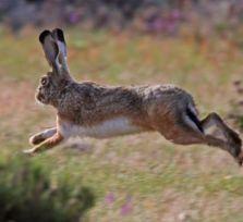 Кипрский браконьер оштрафован на 25 000 евро