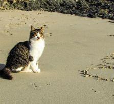 Коты и люди полюбили друг друга 9500 лет назад. Доказано на Кипре!