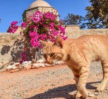 Ларнаку оборудуют точками кормления бродячих котов