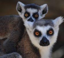 Зоопарк Лимассола приглашает вас на свой день рождения!