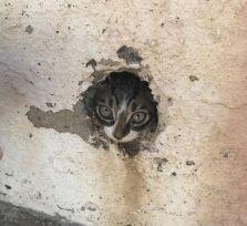 На пляже Курион спасен залезший в трубу котенок!