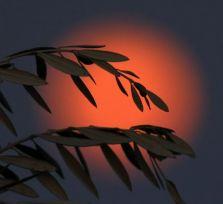 Над Кипром взошла «голубая» Луна в багровых тонах (фото + видео)