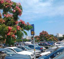 Аэропорт Ларнаки: паркуемся и улетаем