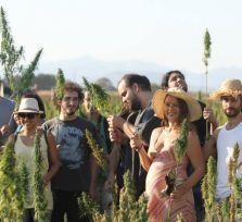 Правительство Кипра одобрило выращивание конопли и производство медицинской марихуаны