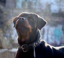Кто виноват, когда собаки нападают на людей?!