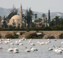 Розовые фламинго: а где вода в соляных озерах?!