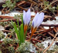 Снег на Кипре 1 апреля. Без шуток