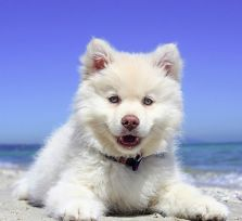 Как обезопасить собаку от перегрева?