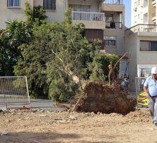 Упавшее в Никосии дерево снесло столб и повредило две машины