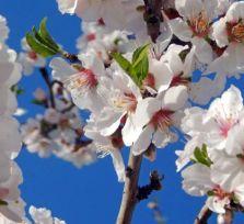Кипр в начале февраля: +20, снег, цветет миндаль