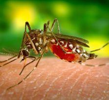 Взрослых комаров Лимассола заманят в магнитные ловушки