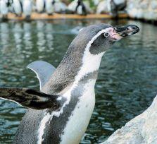 В зоопарке Пафоса — бум рождаемости