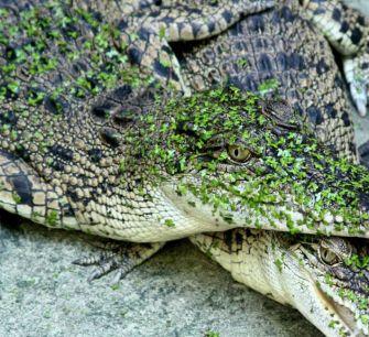 Жители деревни Ахна согласились на соседство с парком крокодилов