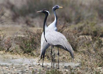Хотите понаблюдать за жизнью птиц в условиях дикой природы?