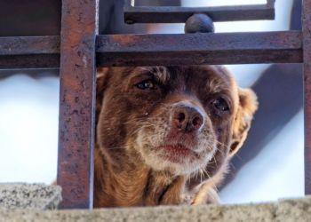 Минсельхоз Кипра призывает сообщать о случаях пассивного жестокого обращения с животными