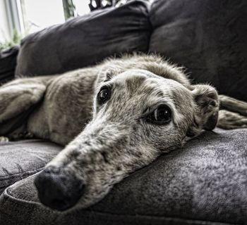 Как избавиться от старого дивана в Лимассоле?