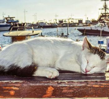 Полиция Кипра: «Животным нужен достойный уровень жизни»
