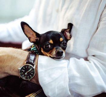 Хотите внести предложения в текст «собачьего закона»?
